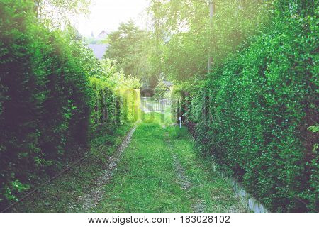 Narrow path with green trees and bushes leading to iron gate