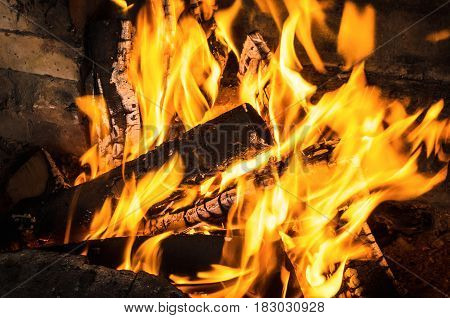 Burning birch logs in bonfire. Fire and embers background.