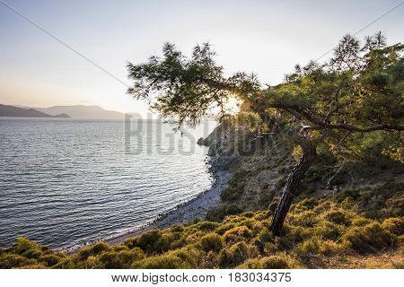 sun shining through leaves of green tree with blue sea on background at sunset