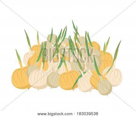 Bunch Onion. Lot Of Vegetables. Big Crop On Farm