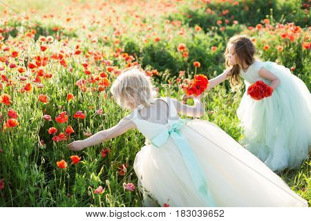 little girl model, childhood, fashion, summer concept - two beautiful girlfriends in white and blue party dresses pick poppy flowers on the field, in hands of each a bouquet of spring flowers