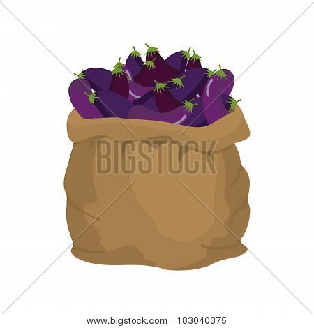 Eggplant Burlap Bag. Sack Of Vegetables. Big Crop On Farm. Sackful Aubergine