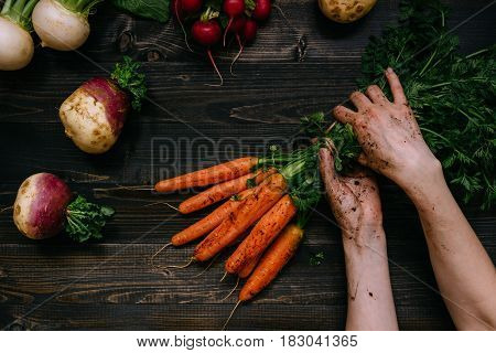 Organic Vegetables. Farmer's Hands Holding Harvested Carrots On The Dark Wooden Background, Top View