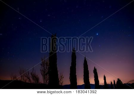 silhouette of cypresses after dusk with a starry sky in Tuscany