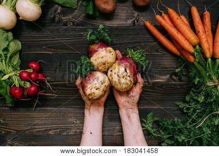 Organic Vegetables. Farmer's Hands Holding Harvested Swede On The Dark Wooden Background, Top View