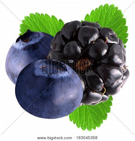 Isolated blueberry and blackberry on white background as package design element.