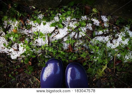 Top view of icepellets lying in the green grass watched by person standing in violet rubber boots.