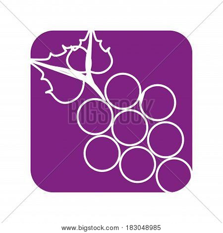 Delicious grapes fruit icon vector illustration graphic design