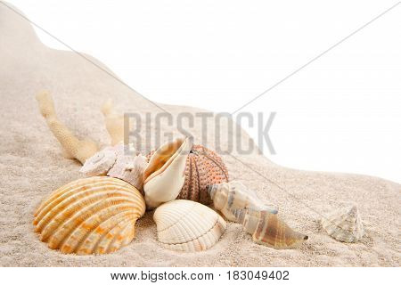 Shells Coral and Dried Sea Urchins on the sand as background