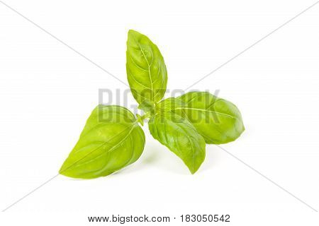 basil isolated close up on a white background