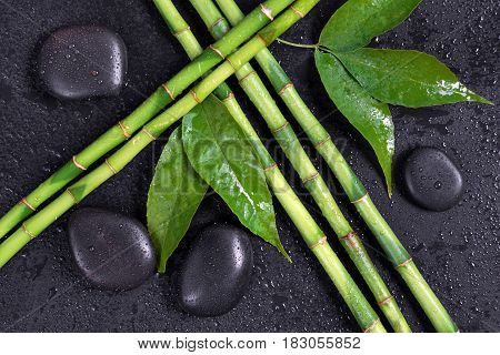 Spa concept with black basalt massage stones and lush green foliage covered with water drops on a black background; top view flat lay