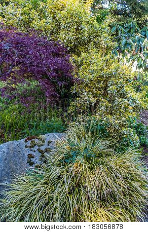 A variety of shrubs make and interesting background.