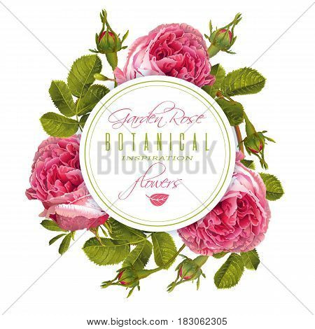 Vector botanical round banner with garden rose flowers on white background. Floral design for natural cosmetics, perfume, health care products. Can be used as beauty logo, wedding invitation card