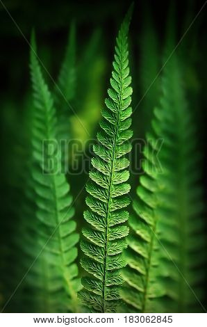 Close up of fern branches, selective focus