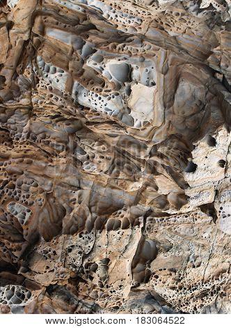 The Quaint Texture Of The Coastal Rock 1