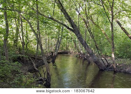 Elm Creek during Summertime in Maple Grove, Minnesota.