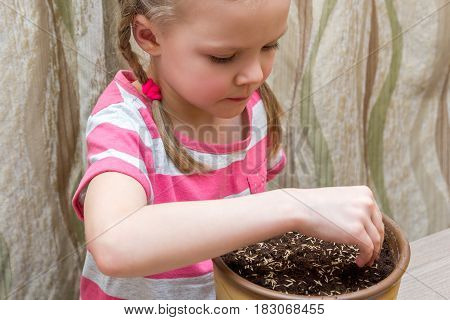 Girl Planting Seeds In A Pot At Table