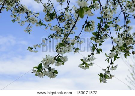 spring summer warmth sun blue sky blooming tree