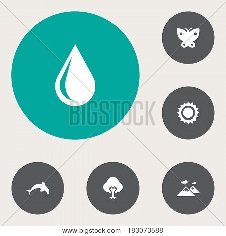 Set Of 6 Bio Icons Set.Collection Of Moth, Grampu, Solar And Other Elements.