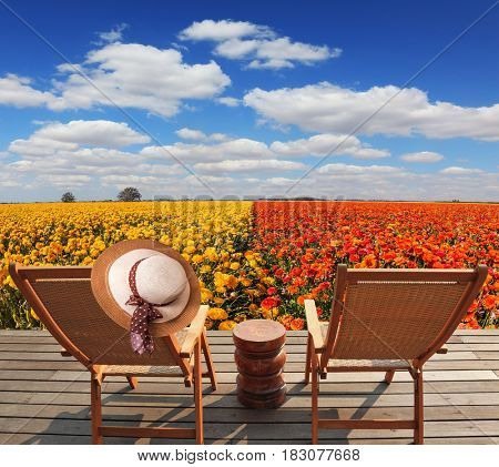 Wooden comfortable sun loungers next to the flower field. The concept of recreation and eco-tourism. Elegant women's straw hat hanging on a deck chair