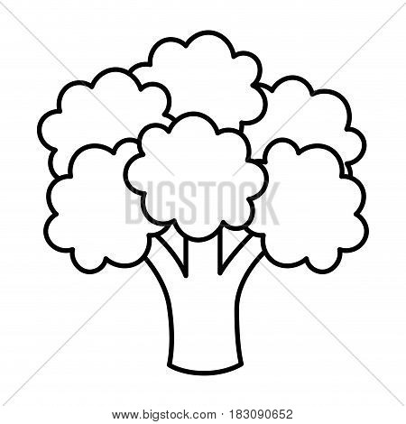 broccoli vegetable icon over white background. vector illustration