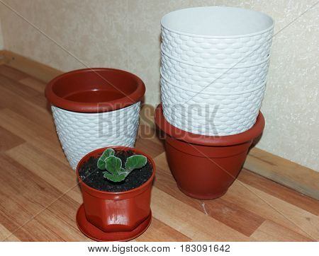 Small green flower leaves and flower pots