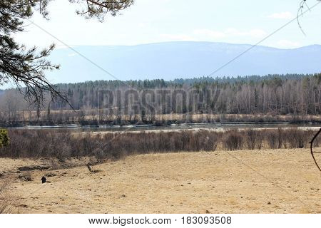 Small river among the dense coniferous forests