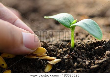 Close up farmer selected seed for planting with sprout