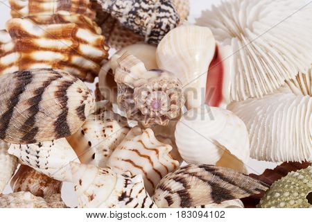 Background of various types of sea shells close up
