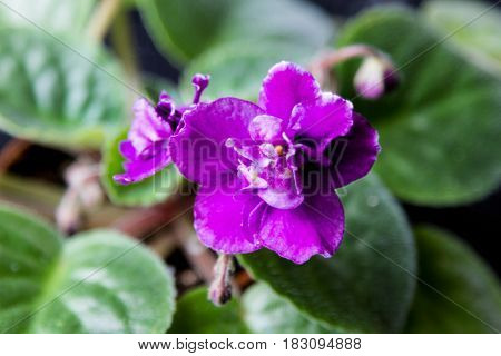 Beautiful Flower Violet