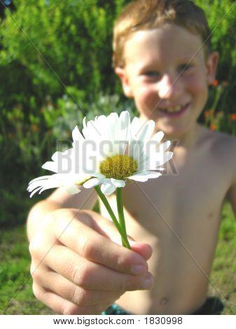 A Boy Showing A Daisy