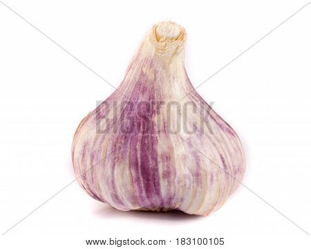 One fresh garlic isolated on white background.