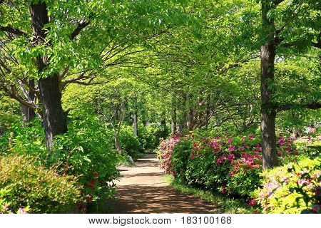 Spectacle of sunny forest green and sidewalk