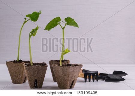 Pots with young seedlings  and little garden tools  on white wooden background