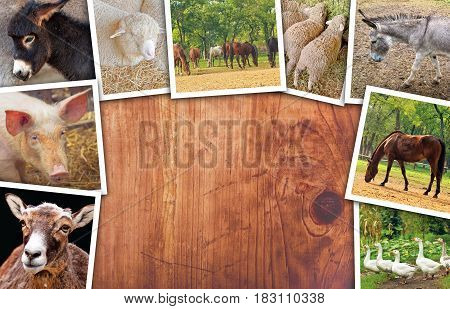 Agriculture and livestock collage photos with various animals on wooden surface as copy space