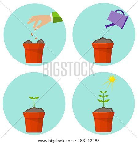 Phases of vegetation of a plant. Flat design vector illustration vector.