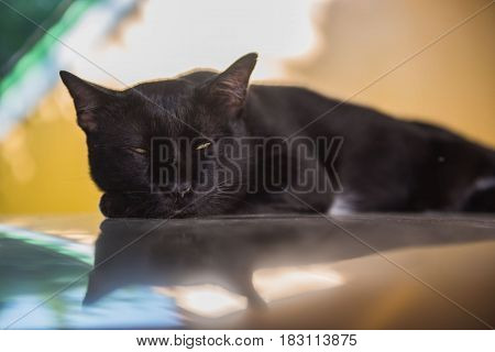 Closeup Black cat sleeping, Cute kitten .