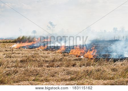 Fires in the dry season After harvest