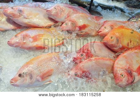Fresh Nile tiapia in the Market. (Oreochromis niloticus-mossambicus)