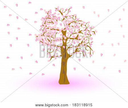 cherry blossom isolated on white background. Vector illustration.
