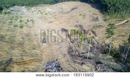 Deforestation. Logging. Environmental problem. Rainforest destroyed for palm oil industry