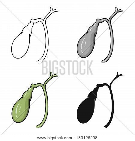 Human gallbladder icon in cartoon style isolated on white background. Human organs symbol vector illustration.