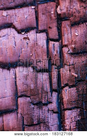Close up image of dark burnt piece of wood