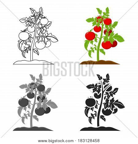 Tomato icon cartoon. Single plant icon from the big farm, garden, agriculture cartoon.