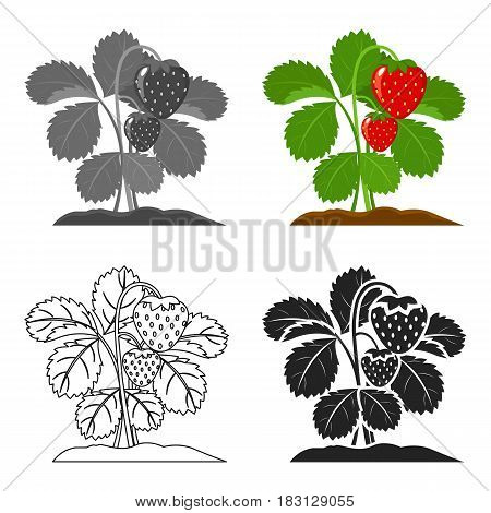 Strawberry icon cartoon. Single plant icon from the big farm, garden, agriculture cartoon.