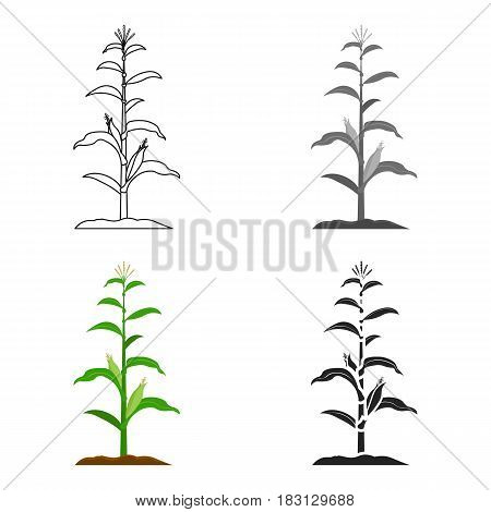 Corn icon cartoon. Single plant icon from the big farm, garden, agriculture cartoon.