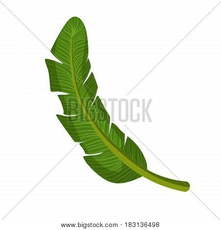 Green palm leaf. Colorful cartoon vector Illustration isolated on a white background