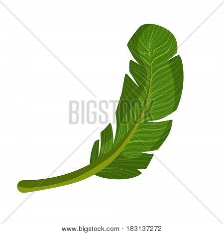 Exotic palm green leaf. Colorful cartoon vector Illustration isolated on a white background