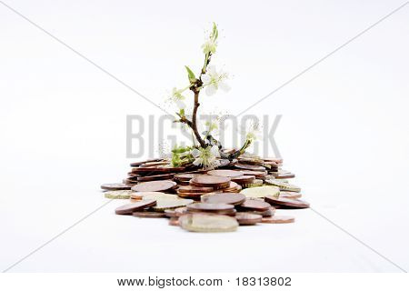 Green Shoots with money
