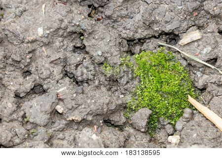 Green Moss On Damp Earth